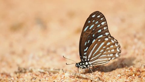 Butterflies are eat mineral on the ground and urinate.