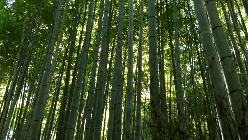 Bamboo forest in Arashiyama Kyoto,Japan | Shutterstock HD Video #10906253