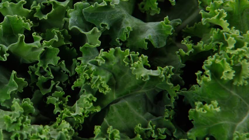 Fresh raw green kale packed in plastic box ready to sell 1920x1080 intro motion slow hidef hd | Shutterstock HD Video #10926566