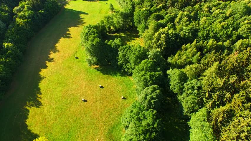 Flight over beautiful evergreen forest | Shutterstock HD Video #10957385