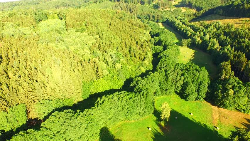 Flight over beautiful evergreen forest | Shutterstock HD Video #10957406