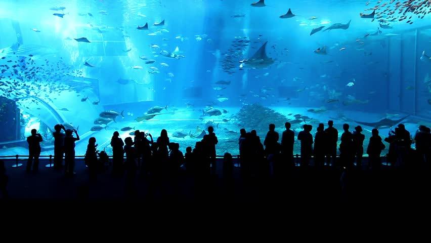 Whale sharks | Shutterstock HD Video #10982861