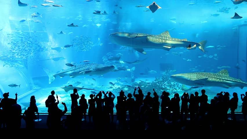 Whale sharks | Shutterstock HD Video #10982867