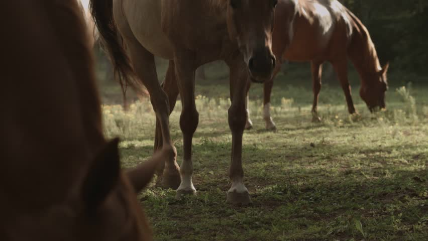 Horses on a Country Farm | Shutterstock HD Video #11012750