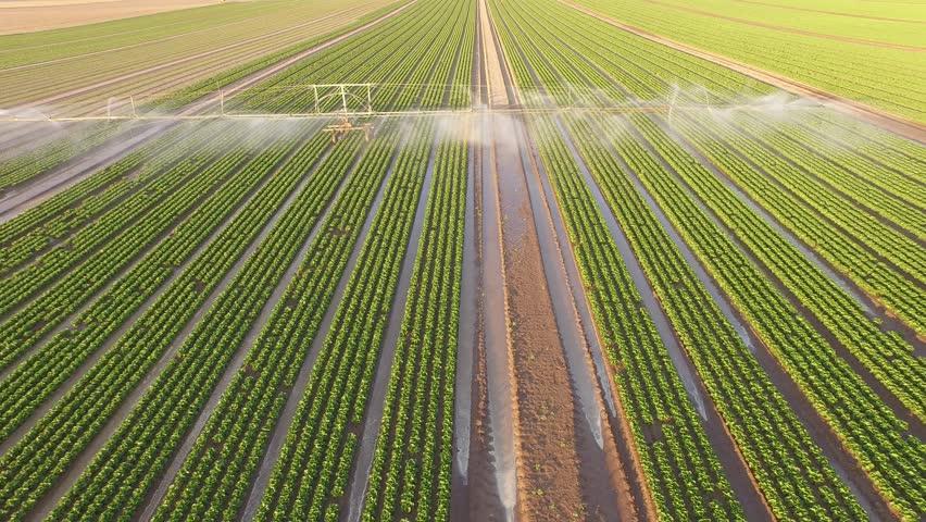 Industrial farming 4K Aerial video footage: Irrigation of a lettuce field in Europe in Summer. | Shutterstock HD Video #11142317