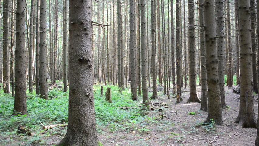 Pine wood   Shutterstock HD Video #11148983