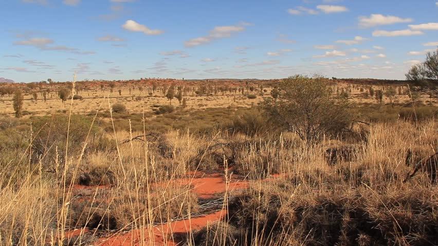 Outback Australia Landscape Red Desert Sand and Dry Arid Grasslands. Northern Territory Australia.