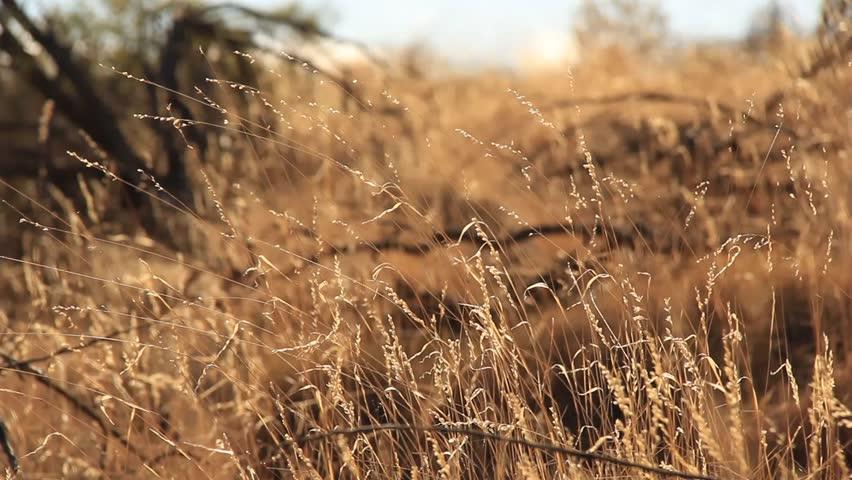 Outback Australia Landscape Red Desert Sand and Dry Arid Grasslands. Northern Territory Australia.