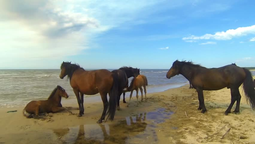 Horses on the Baikal lake shore | Shutterstock HD Video #11204126