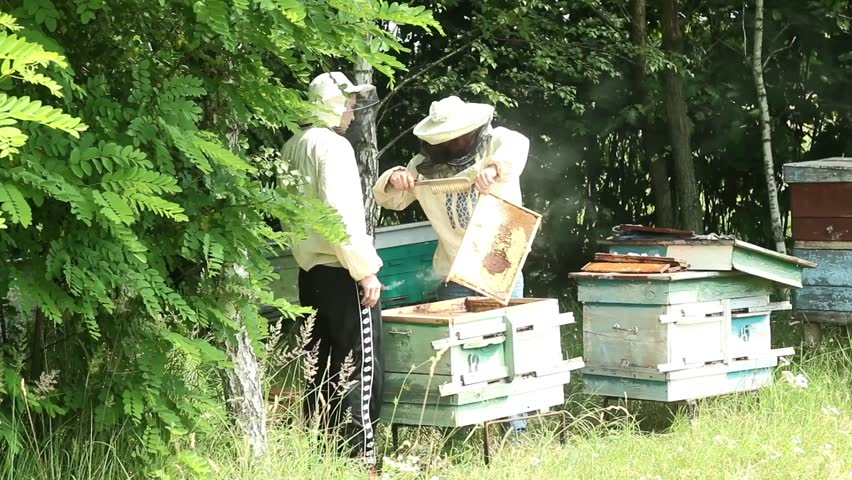 Beekeepers are engaged on the work near forest | Shutterstock HD Video #11255330