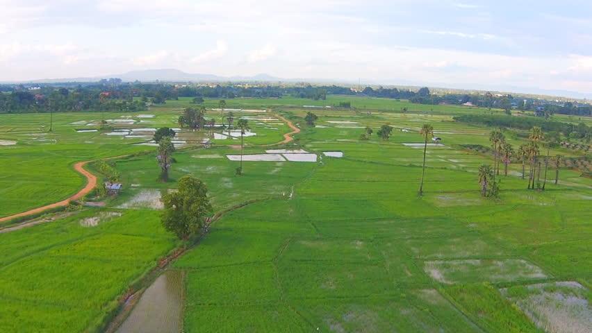 Aerial shot rice field    Shutterstock HD Video #11365757