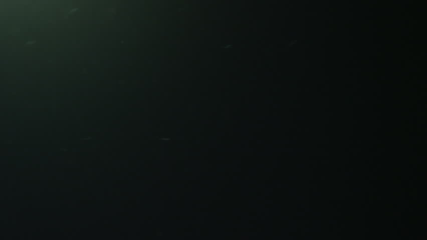 UW black water, particles, ray of light, Azores, 2012 #11404715