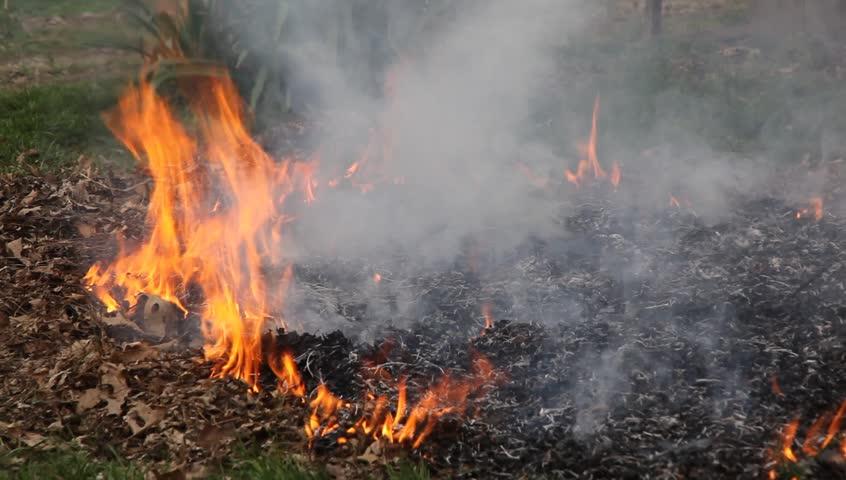 Burning leaves | Shutterstock HD Video #1144888