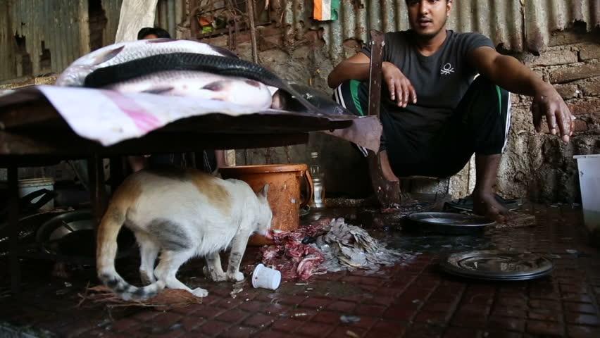 MUMBAI, INDIA - 11 JANUARY 2015: Cat eating fish leftovers under a stand of market in Mumbai.   Shutterstock HD Video #11476400