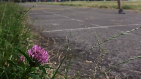 The guy at the stadium runs. Closeup of flowers in the background moving his feet.