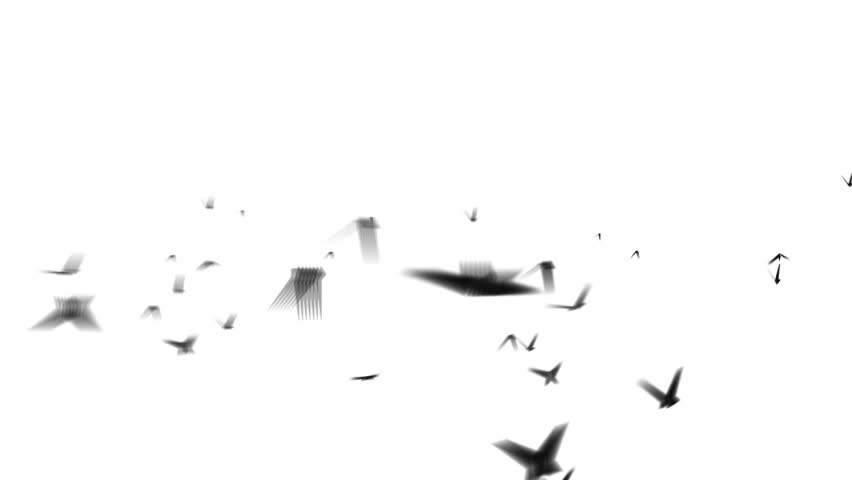 flock birds isolated startled crows taking flight flying away white screen flock birds flies left-right along horizon,Flock sparrows flight compositing onto your footage alpha matte Slow motion loop