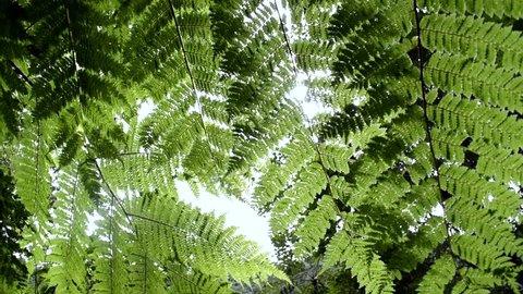 Ferns in forest. Sun light through ferns in rain forest, Costa Rica