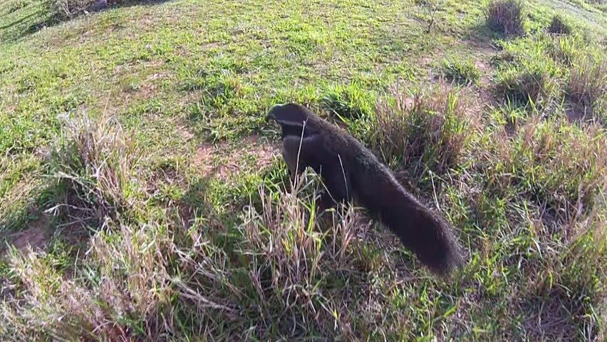 aerial view from anteater in countryside of Brazil