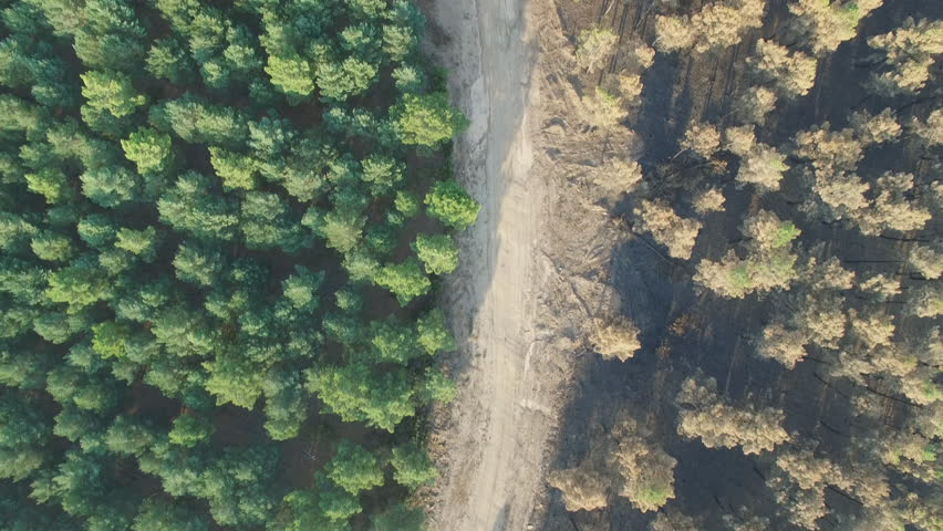 Aerial view of burnt pine tree forest against safe forest thanks to firebreak, aerial view in 4K | Shutterstock HD Video #11540597