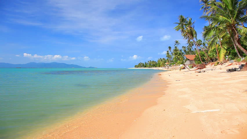 tropical beach and palm tree   Shutterstock HD Video #1166149