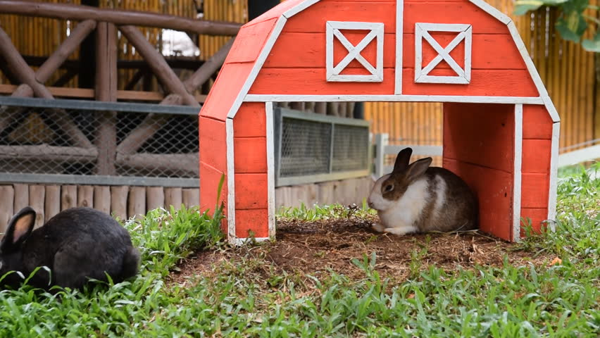 Wooden Rabbits House with rabbits