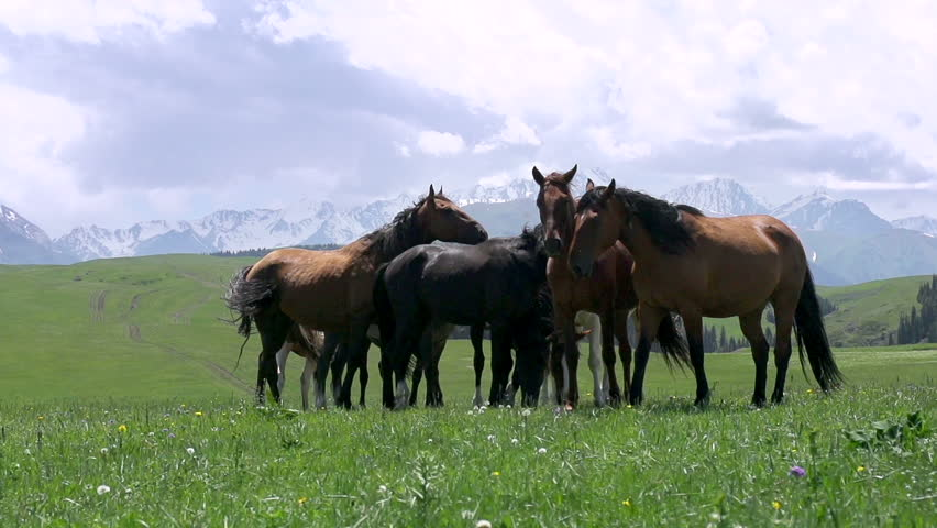 Herd in the Picturesque Foothills. Small herd of horses grazing amidst the beautiful landscape in the foothills | Shutterstock HD Video #11737700