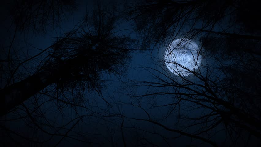 Moving Under Trees With Full Moon At Night. With sound