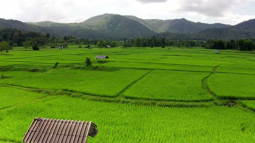 Aerial shot rice field and mountain view    Shutterstock HD Video #11971718