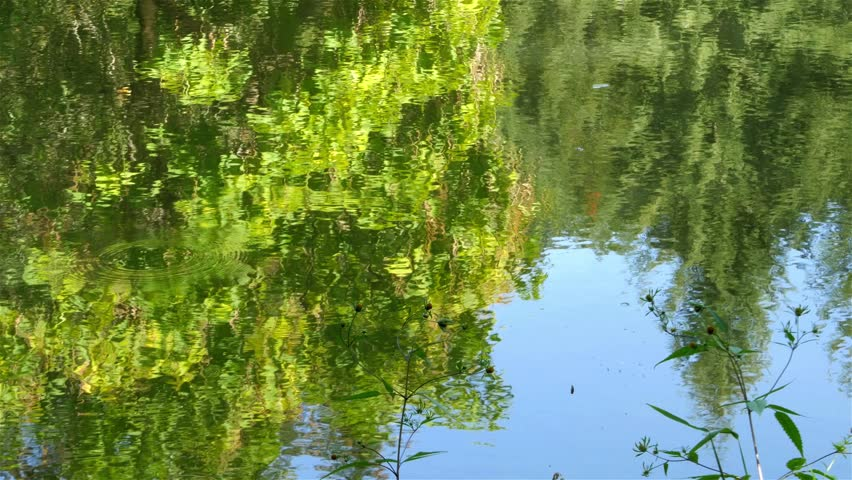 Lake water ripple,forest trees and blue sky reflection on the surface,beautiful scene of nature detail,close up,sunny day,weather forecast,symbolic shot.   Shutterstock HD Video #12004028