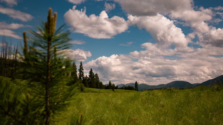 Timelapse of young trees in montana with rolling cloudy skies