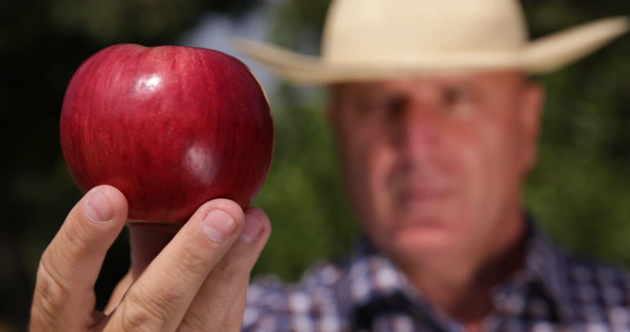 Farmer Showing Red Apple Fruit Man Checking Verify Examine Quality Closeup Macro ( Ultra High Definition, UltraHD, Ultra HD, UHD, 4K, 2160P, 4096x2160 )