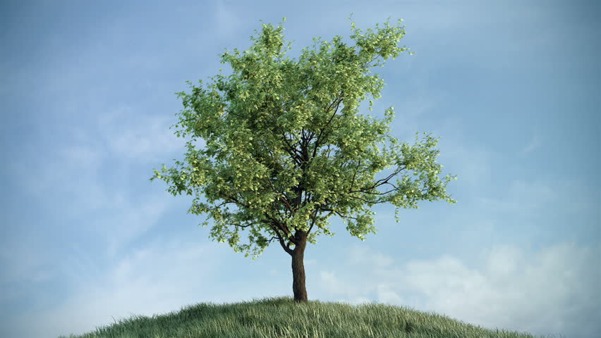 Growing tree on the hill against sky (with alpha matte, full hd)