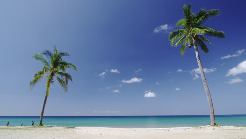 2 Lonely Palms on the Beach #12144158