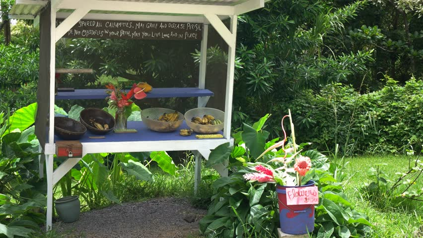 A variety of freshly cut flowers and fruit for sale at a roadside stand on the road to hana, maui | Shutterstock HD Video #12311798