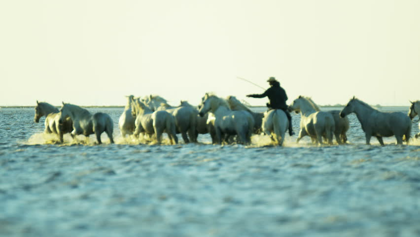 Cowboy Camargue rider animal horse sunset grey livestock nature France guardian Mediterranean sea outdoor marshland freedom RED DRAGON #12327455
