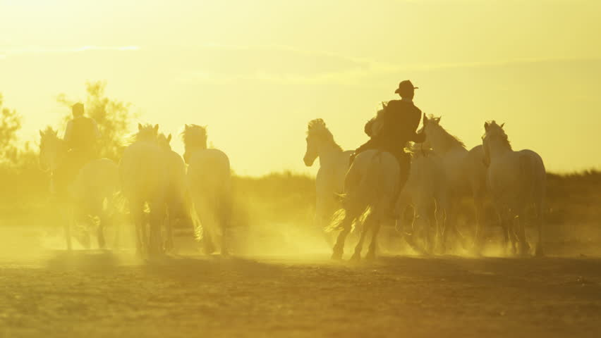 Cowboy Camargue, France animal horses wild grey livestock running sun flare Mediterranean nature freedom running tourism travel RED DRAGON | Shutterstock HD Video #12328208