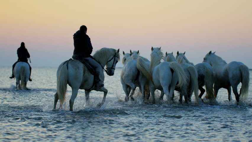 Camargue animal horse France sunrise wildlife white livestock rider trotting cowboy water Mediterranean outdoors wetland freedom RED DRAGON #12328418
