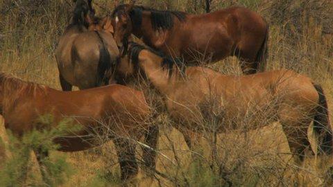 Aerial American Wild horses Rangeland BLM Land USA