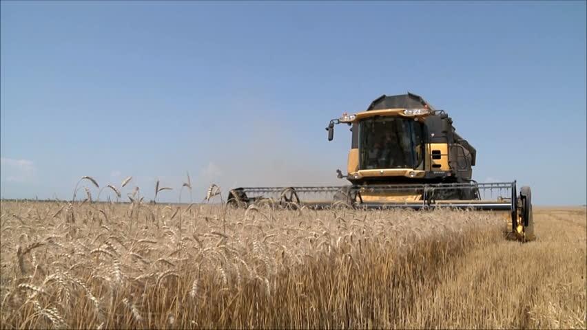 Wheat harvesting shearers