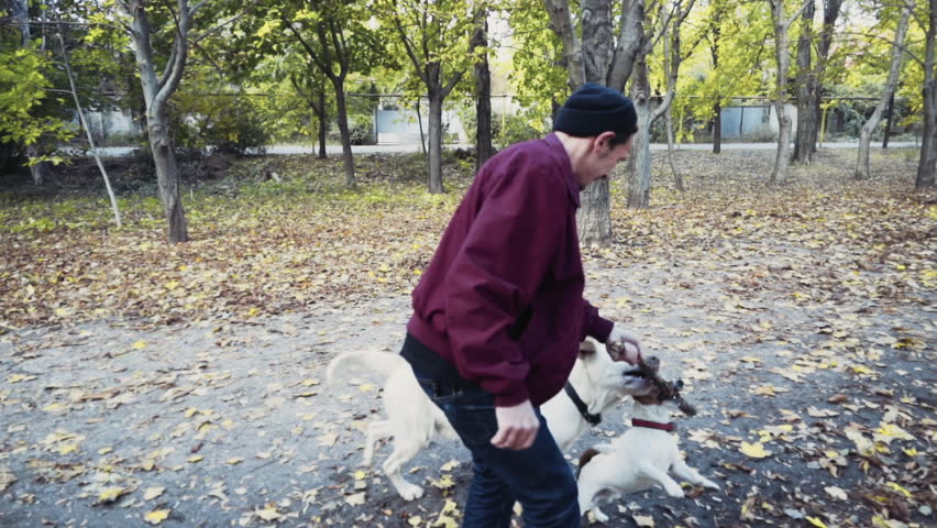 Young man playing with two dogs in autumn park slow motion | Shutterstock HD Video #12643070