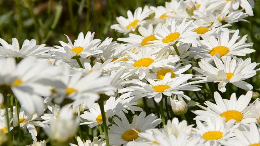 Flowers   Shutterstock HD Video #1267381