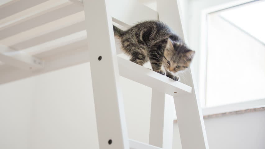 Kitten climbing down the ladder almost falling. Baby cat walking on tall wooden bed and trying to get down over the ladder almost falling down, catching up.