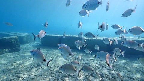 fish school underwater sun beams and sun shine calming and relaxing ocean scenery