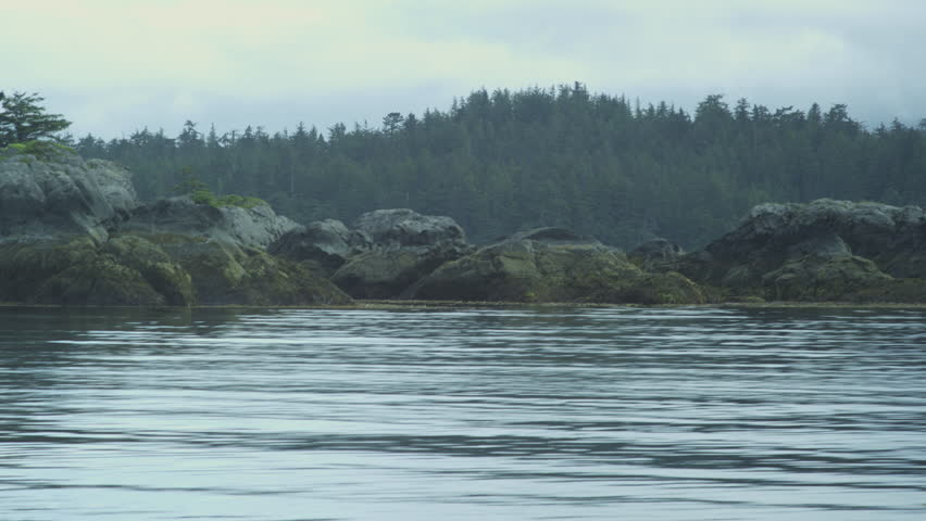 Shot from a boat past coastline, forest, bald eagle perched in tree, Alaska, 2011