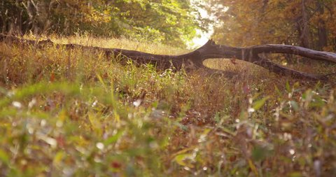 An invitation to a peaceful to walk in the park during autumn. 4k Footage Shot with the Red Epic Camera.