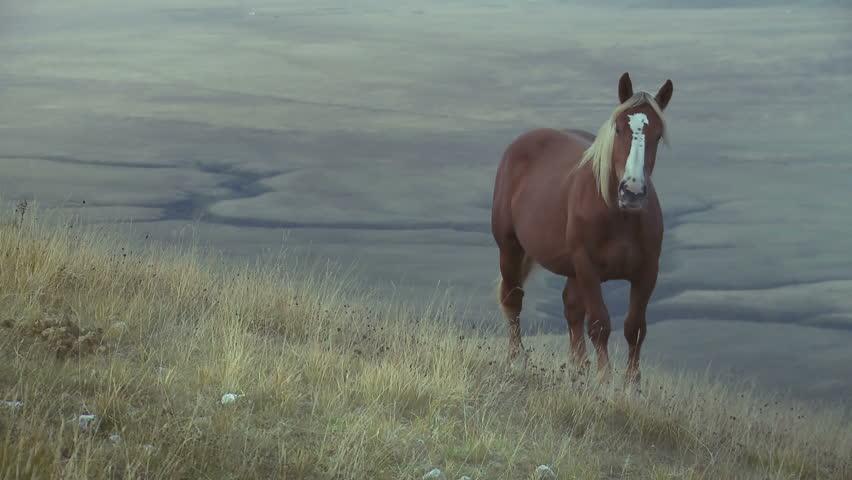 Horse in the wilderness | Shutterstock HD Video #1305520