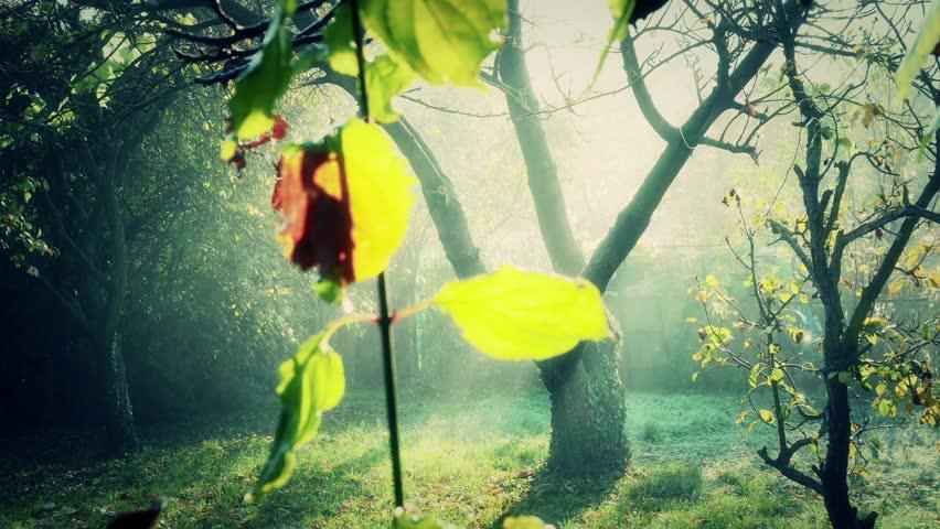 4K Romantic Autumn Morning in Small Garden | Shutterstock HD Video #13068605