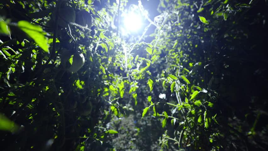 4k00 15camera Moving Through Plants At Night 4k Strong