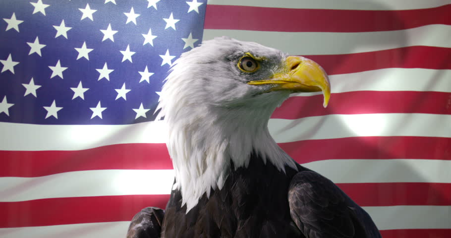 4K Close up of American Bald Eagle against animated background of American flag waving in the wind. Shot on RED Epic. #13372127