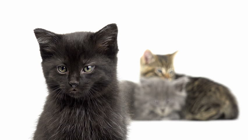 Three cute baby kittens sitting on white background.  #13377602